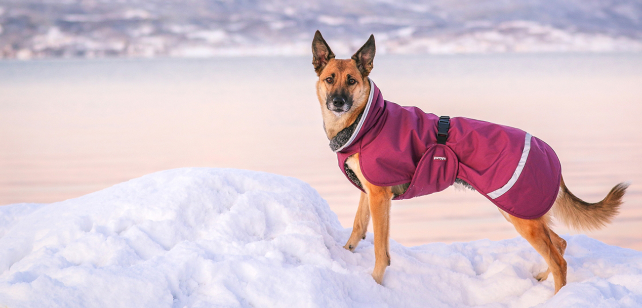 Winter Sale at Dogmania